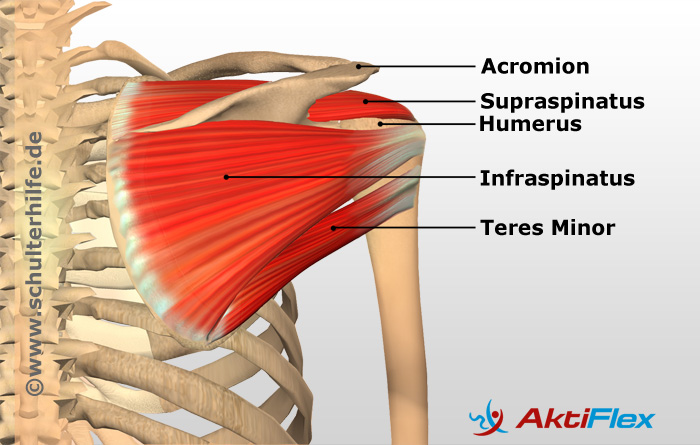 The Muscular Imbalance Of The Shoulder Explained By Schulterhilfe