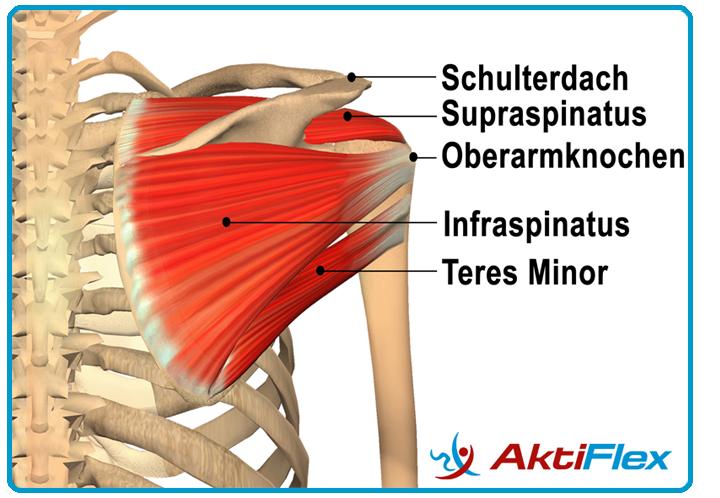 Der Geheimtipp für Sportler - Schulterhilfe.de